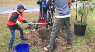 tree-planting_45